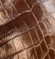 croco chocolat